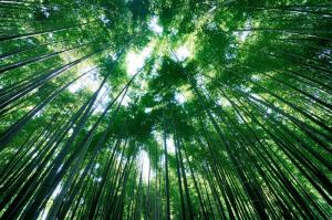 鎌倉 報国寺の竹庭