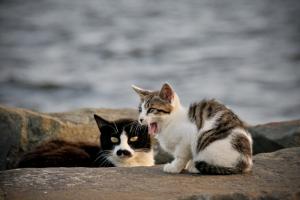 城南島の猫の親子