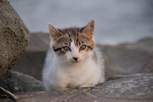 城南島の子猫