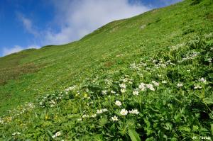 鉢ヶ岳周辺のお花畑